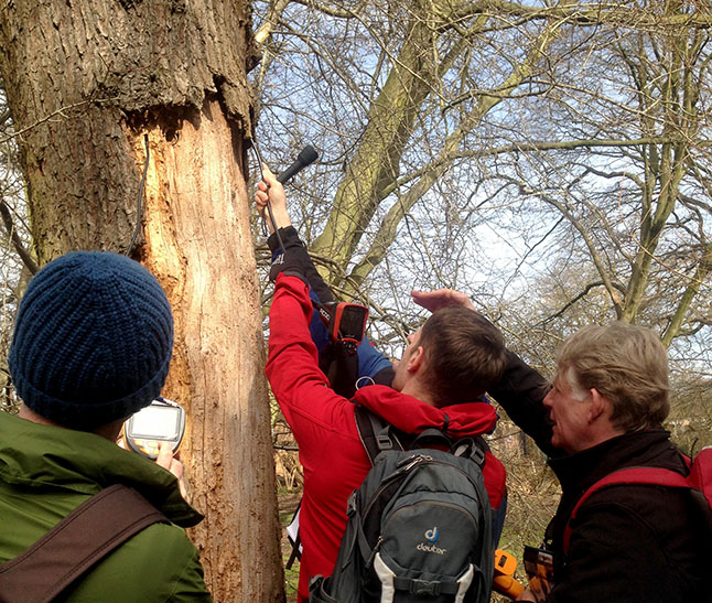 LTOA Bats and Woodland Training course 3 March 2016